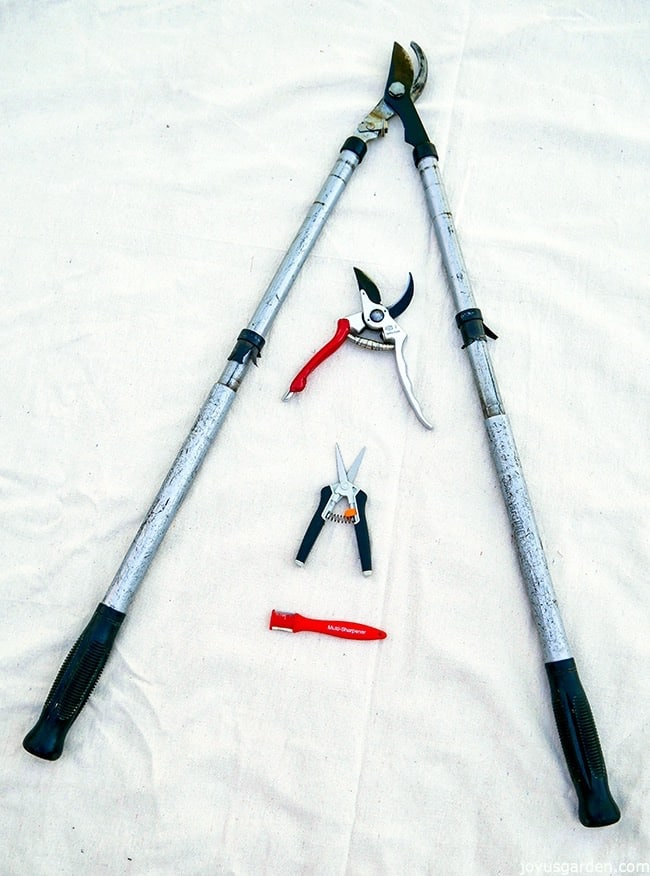 a small sharpening tool, floral nippers & a pair of felco pruners sit on a white cloth with a pair of silver loppers