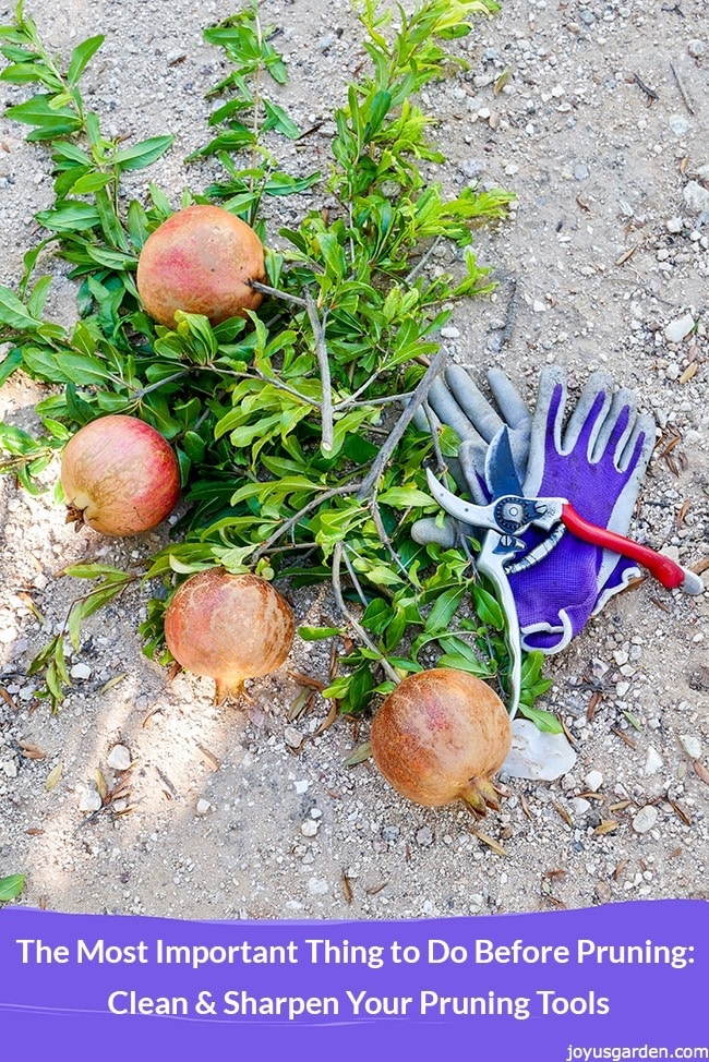 The Most Important Thing to Do Before Pruning: Clean And Sharpen Your Pruning Tools