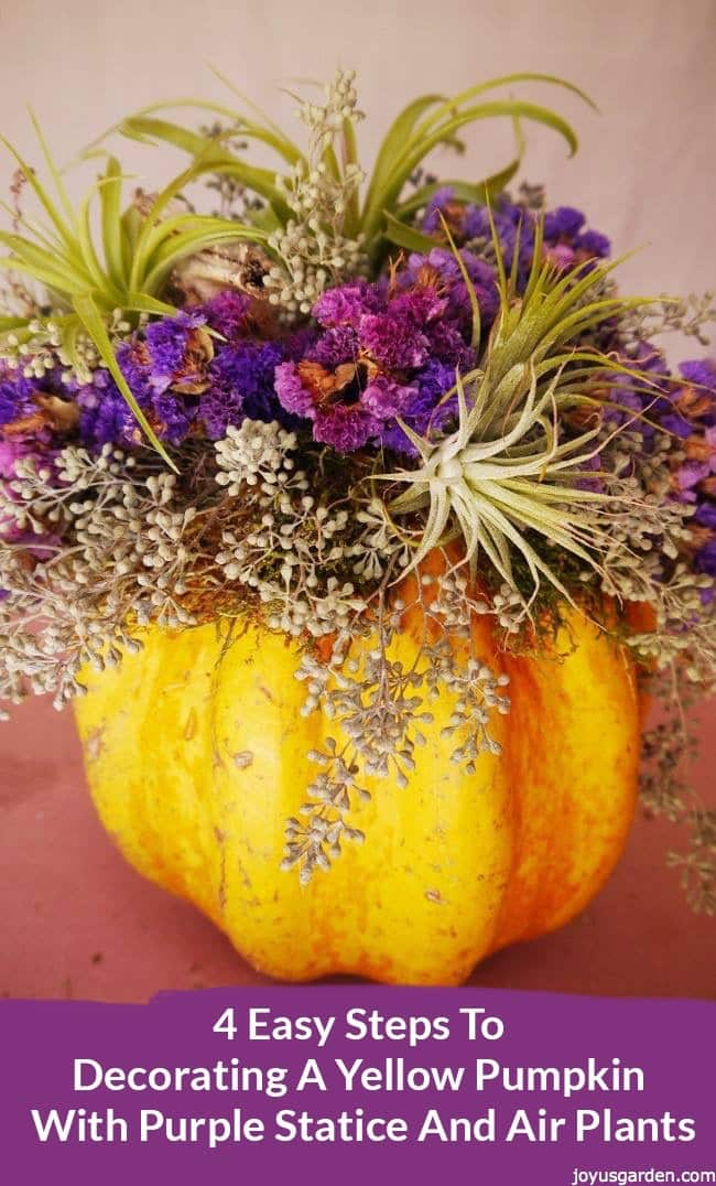 a yellow pumkin is decorated for fall with with purple statice,eucalyptus seeds & air plants the text reads 4 Easy Steps To Decorating A Yellow Pumpkin With Purple Statice And Air Plants