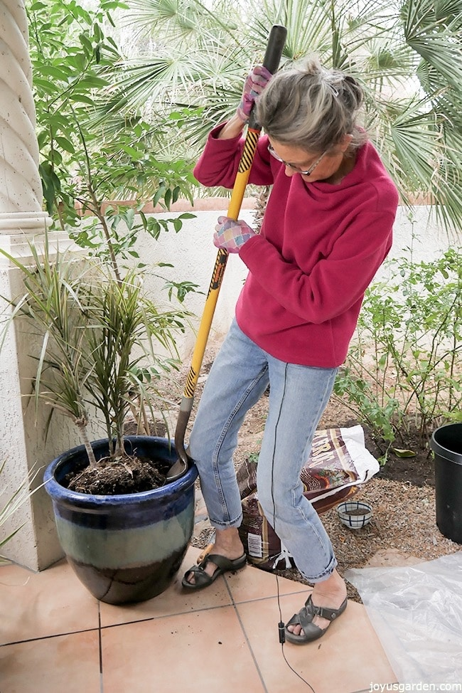 Nell Foster is using a shovel to loosen a Dracaena marginata from a blue ceramic pot. She's working outdoors & there are plants, a bag of potting soil & a grow pot behind her