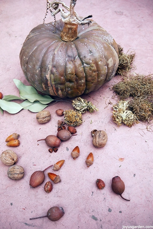 a brown pumpkin sits on a table with dried leaves, spanish moss, nuts & pods