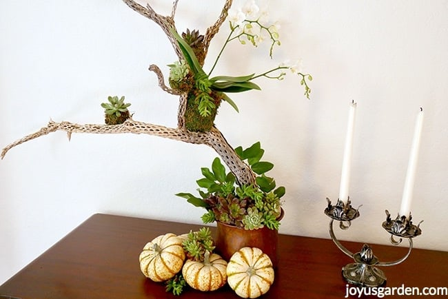 1 white phalaenopsis orchid and small succulents are placed on a cholla branch White and orange pumpkins and succulents cuttings are at the base Fall table decoration