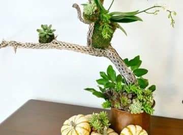 A Fall Table Decoration With Succulents, An Orchid and Other Natural Elements
