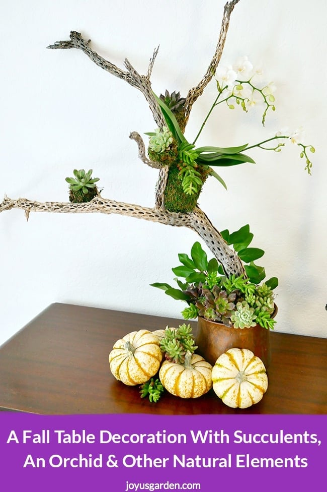 A white orchid is perched in a cholla wood branch with white pumpkins, succulents, fruits & more at the base the text reads A Fall Table Decoration With Succulents, An Orchid and Other Natural Elements