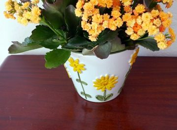 A Popular Succulent Houseplant- Caring For Flowering Kalanchoes
