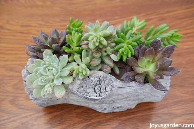 planting watering succulents in pots without drain holes. Black Bedroom Furniture Sets. Home Design Ideas