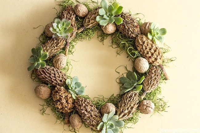 a magnolia cone & walnut wreath decorated with succulents