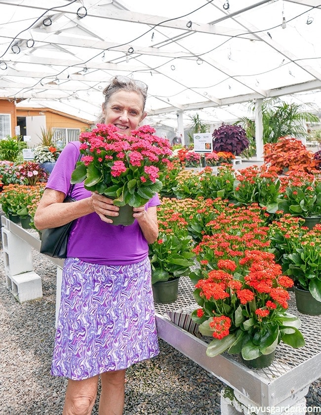 Nell Foster is holding a hot pink kalanchoe at a garden center. She's wearing a purple shirt & is surrounded by kalanchoe plants on benches