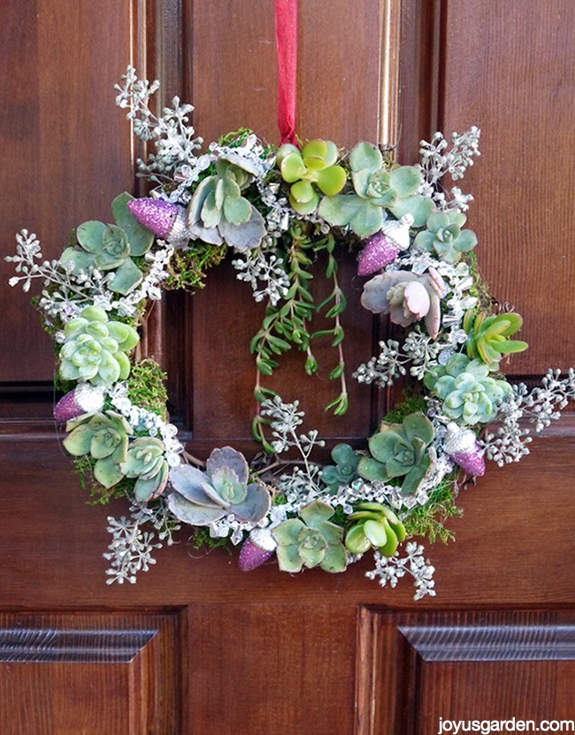 a small wreath decorated with succulents, eucalyptus berries & glittered acorns hangs on a door