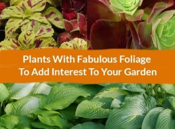 Collage made with Plants With Fabulous Foliage To Add Interest To Your Garden