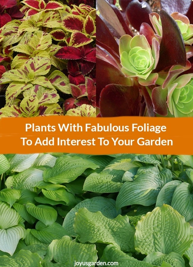 Plants With Fabulous Foliage To Add Interest To Your Garden