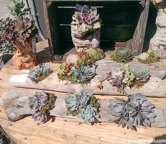 beautiful succulent & driftwood arrangements sit on a table in the bright sun