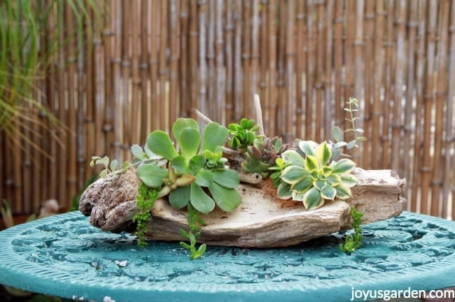 a succulent arrangement on a large piece of driftwood on a patio bistro table
