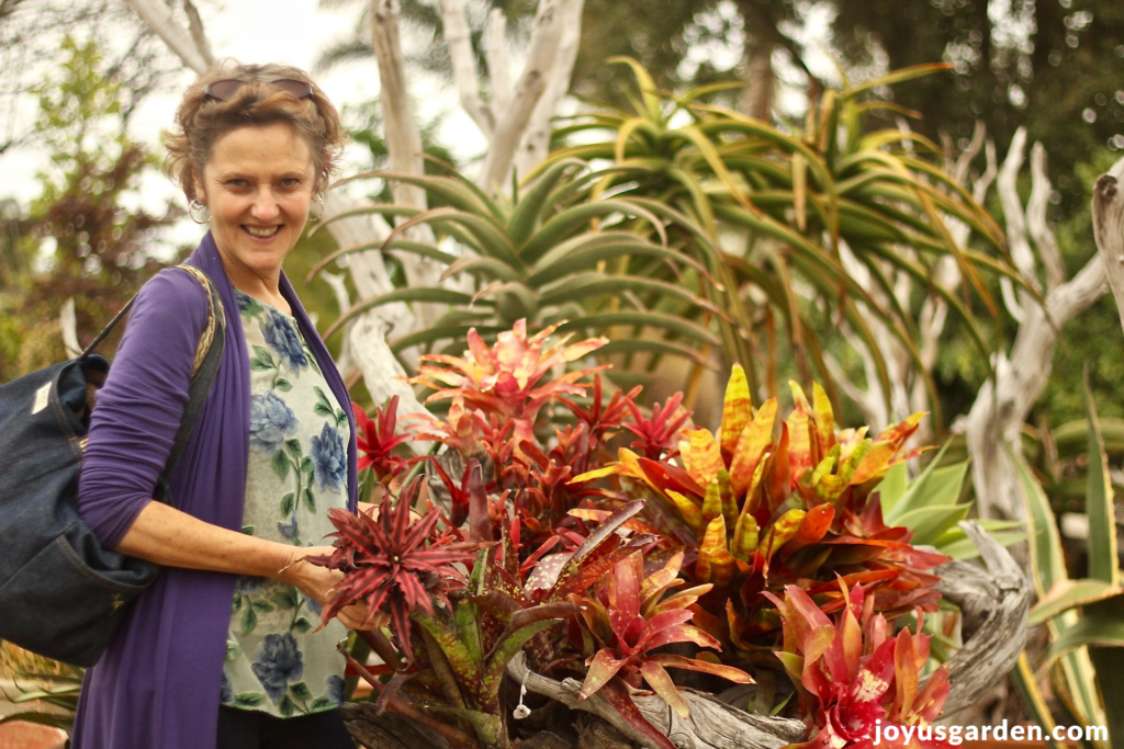 How i water my bromeliad plants indoors joy us garden - How often to water vegetable garden ...