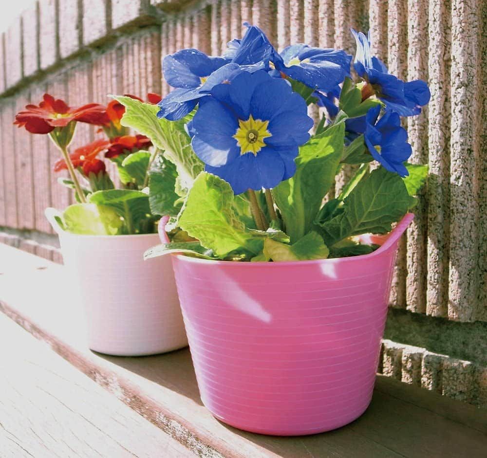 two pink tubs with flowers inside them