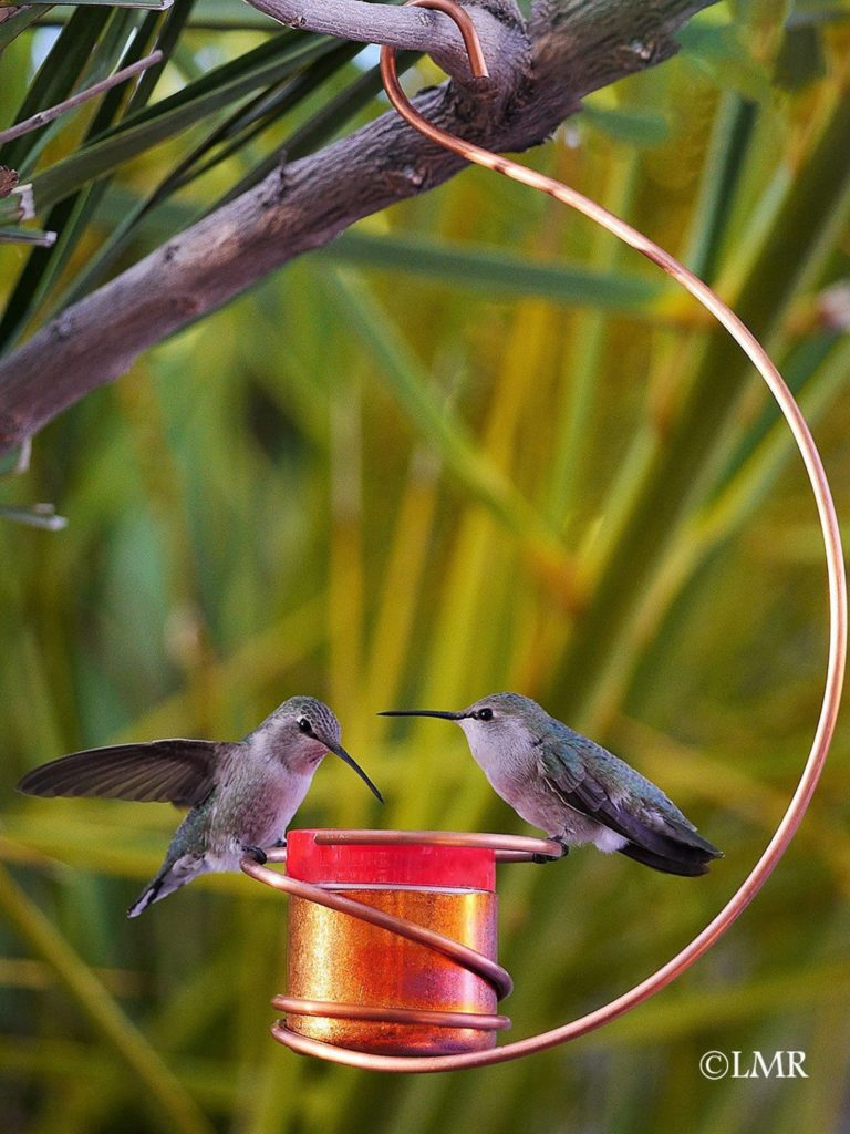 two hummingbirds eating out of a copper hummingbird feeder
