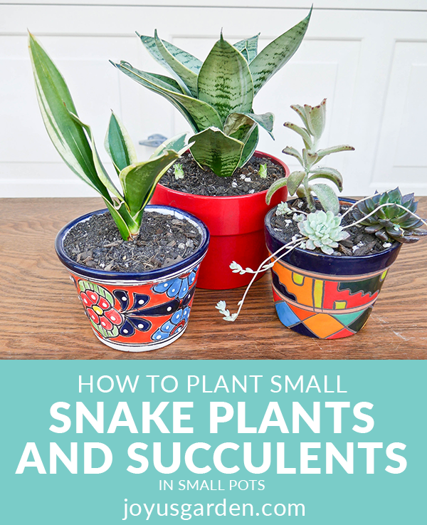 2 small snake plants & a small grouping of succulents sit on a table in small colorful pots the text reads how to plant small succulents & snake plants in small pots