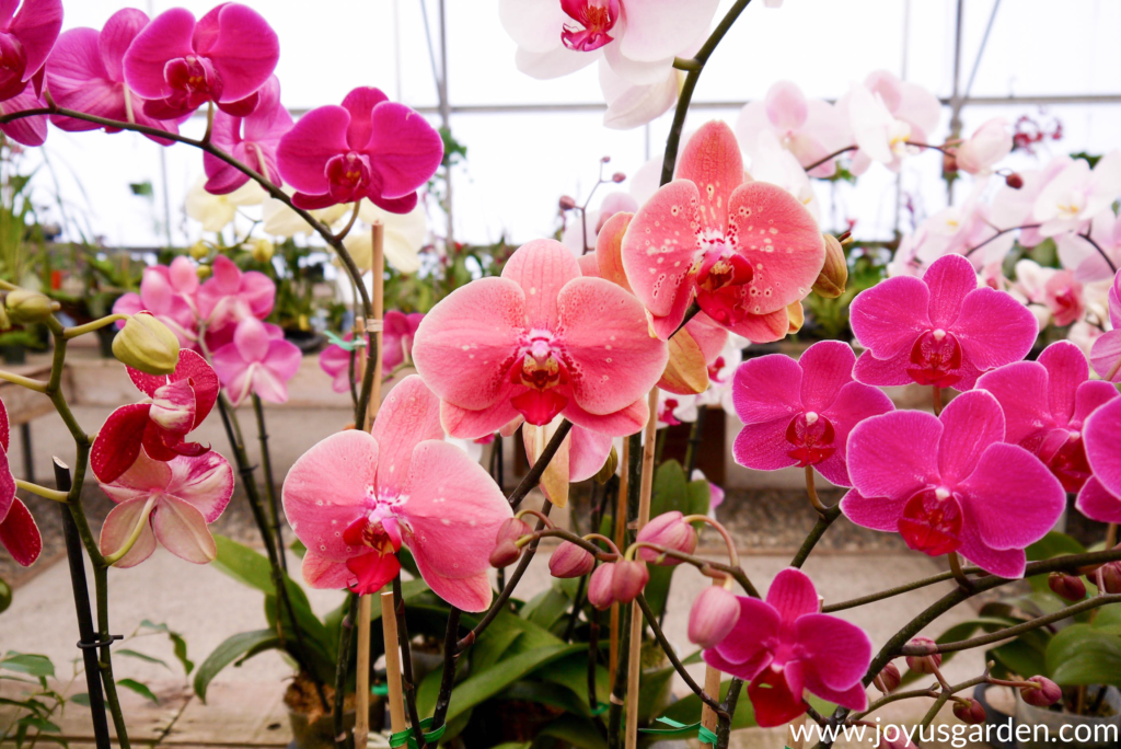 Orchids are gorgeous and long lasting