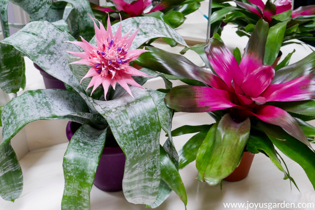 Add color to your space with a variety of plants