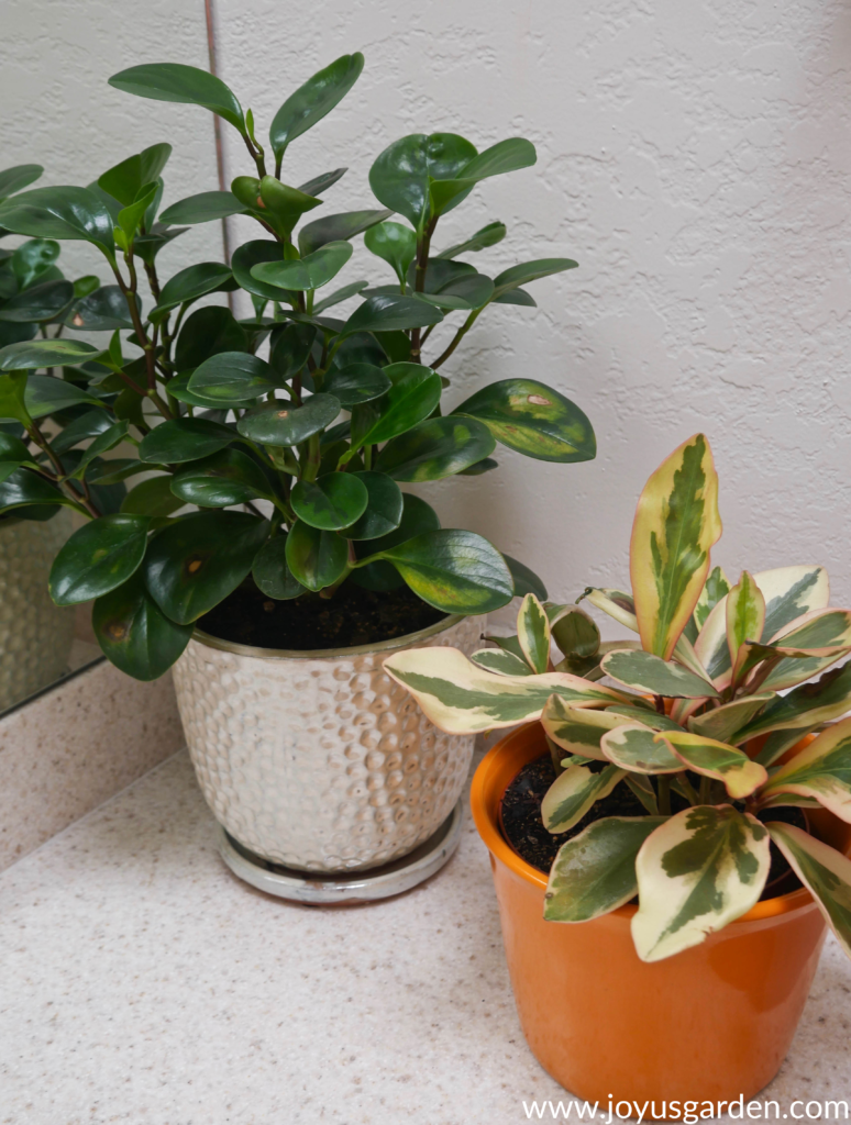 A variety of houseplants