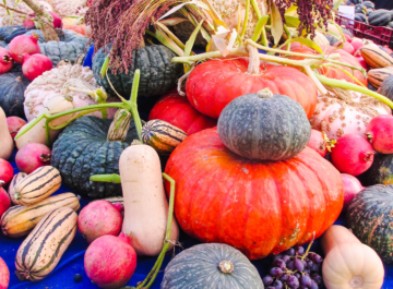 a large display of pumpkins & other fall squashes in many shapes & sizes