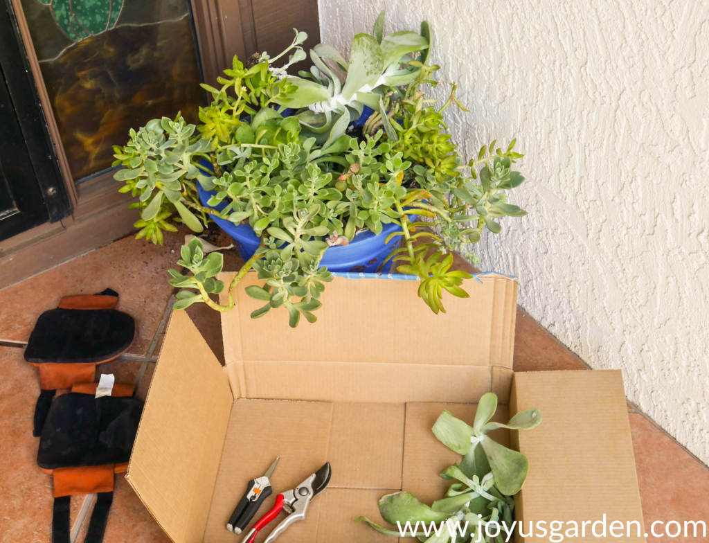 a succulent planter with knee pads & a box with pruners & cuttings in the foreground