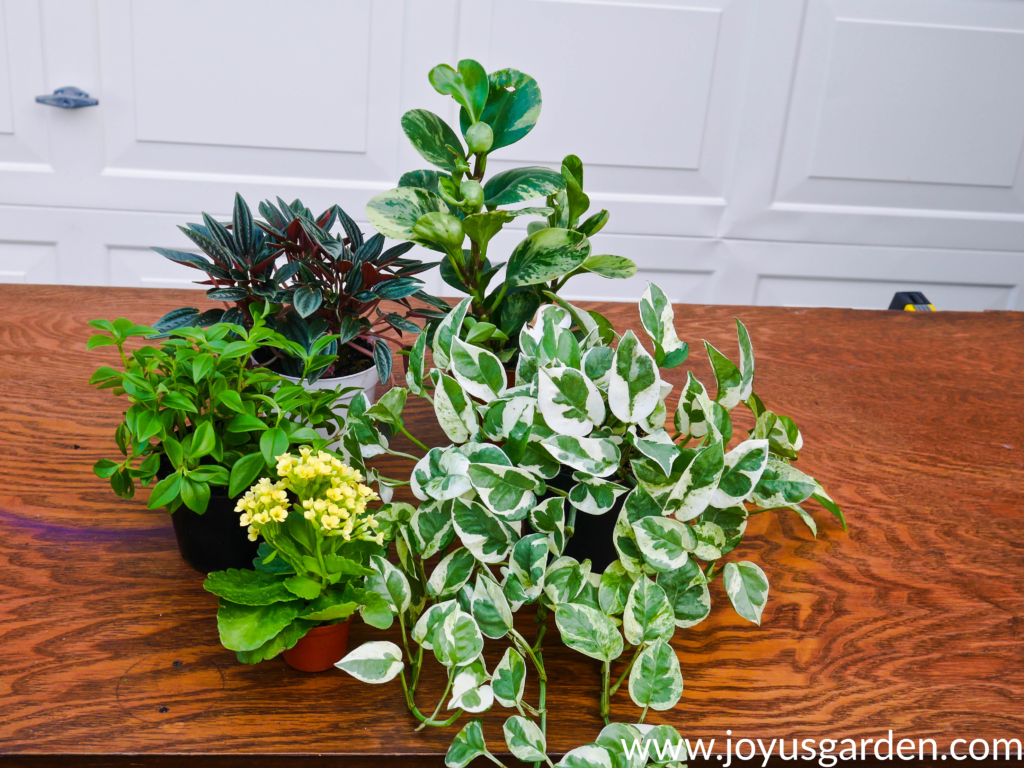 "a variety of 4"" houseplants grouped on a table used for dish gardening"