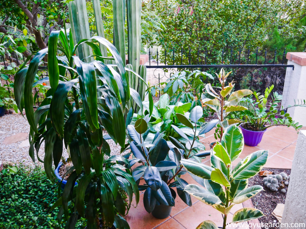 a variety of houseplants outside on a tile walkway