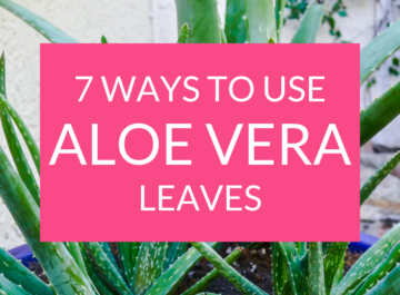 7 Ways to Use Aloe Vera Leaves Plus How to Store Them!