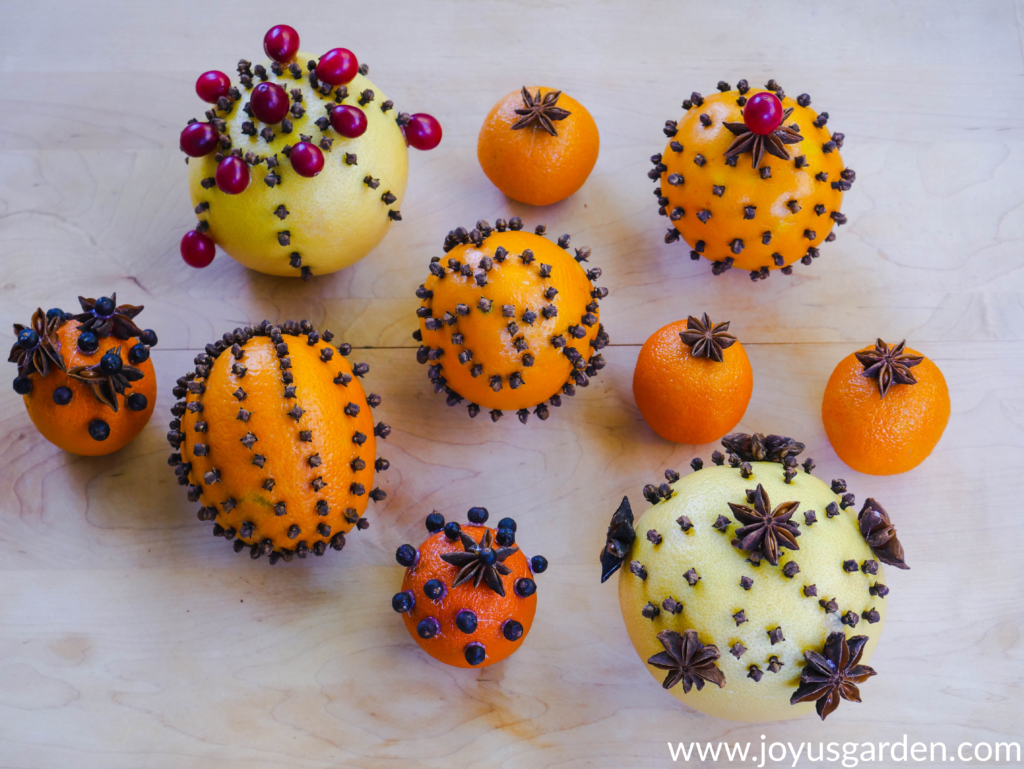 close up of citrus fruits adorned with whole cloves star anise cranberries & juniper berries
