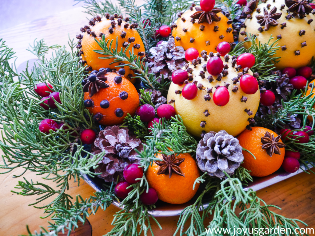 close up of a tray filled with spice adorned citrus fruits cranberries glittered pine cones evergreen & rosemary branches