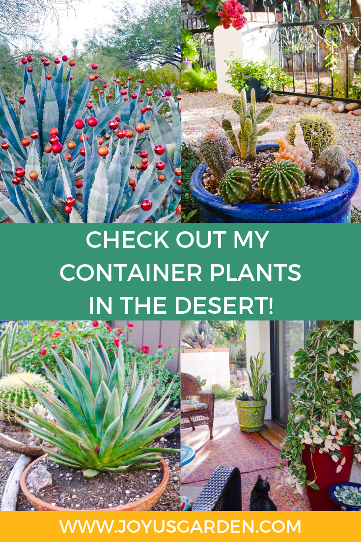 a collage comprised of 4 photos with desert plants the text reads check out my container plants in the desert with www.joyusgarden.com at the bottom