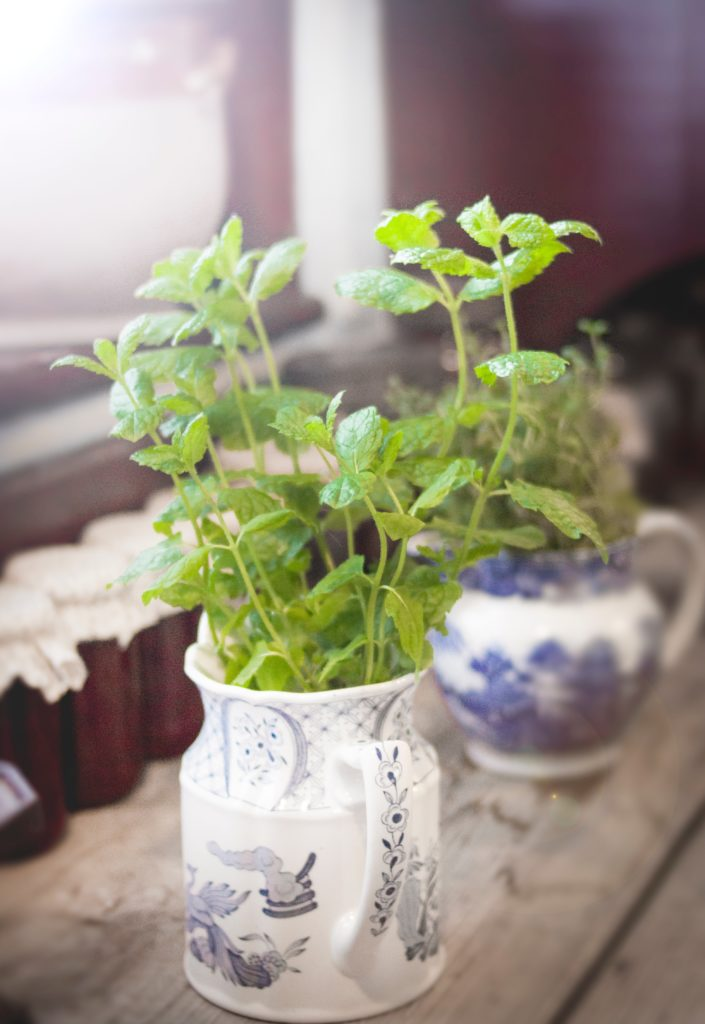 Mint Dried Herbs for Candle Making