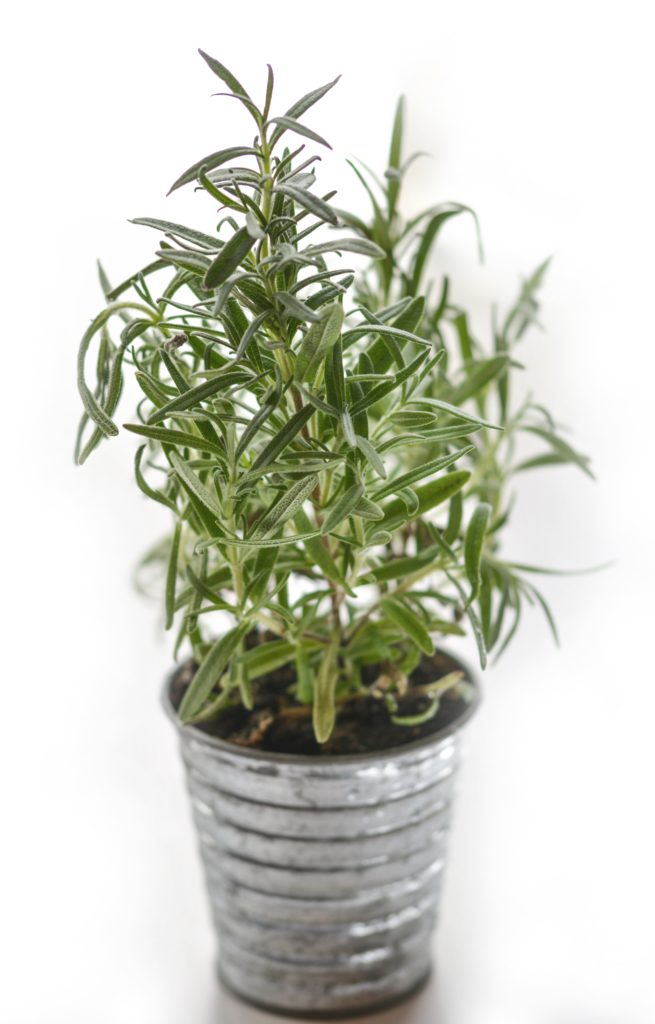 Rosemary Dried Herbs for Candle Making
