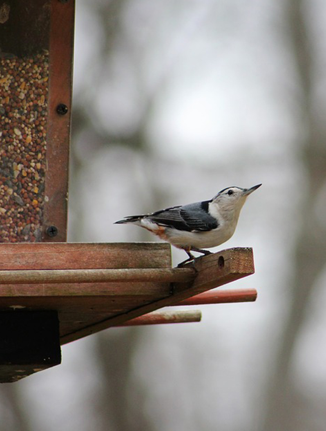 12 Quality Bird Feeders Your Garden Needs Right Now
