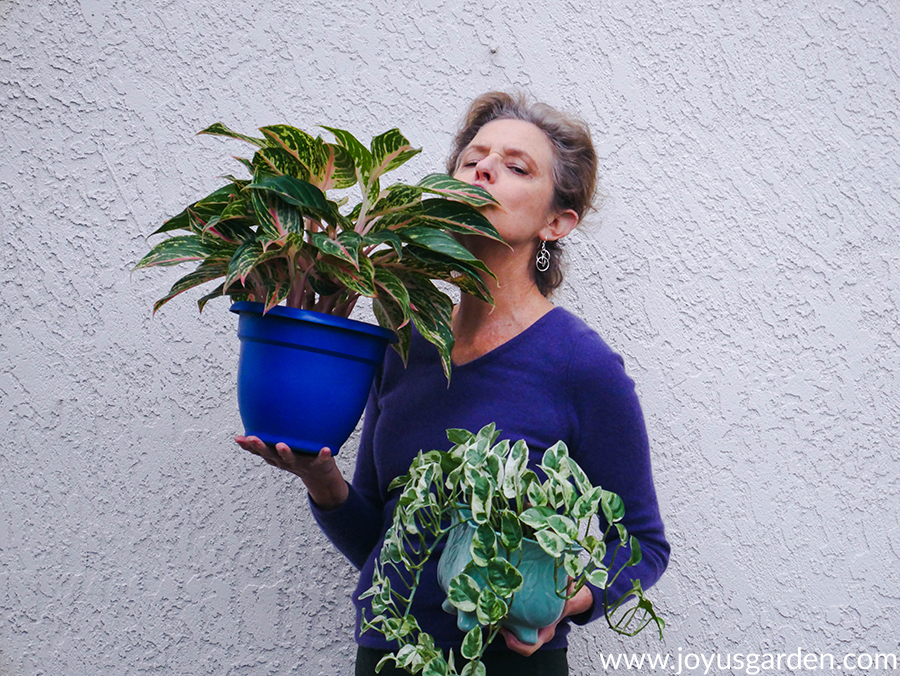 nell foster of joy us garden holds an aglaonema red & a pothos en joy