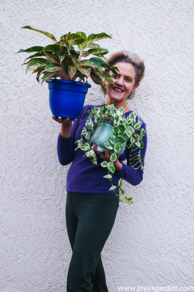Nell's Horticultural Adventures: A Love Affair With Houseplants