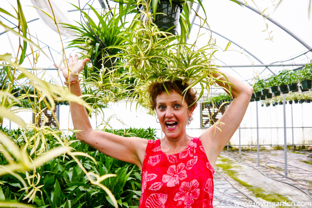 nell foster of joy us garden is in a pink dress underneath spider plants with babies
