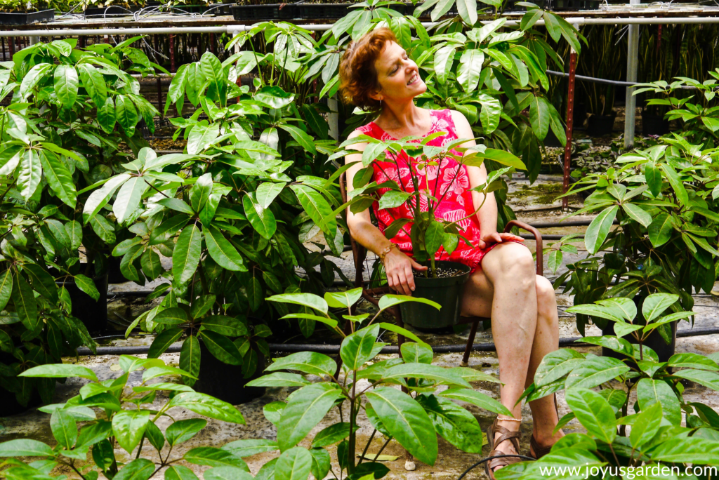 nell foster of joy us garden sits in a chair in a greenhouse amongst many schefflera amates
