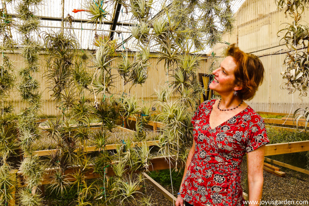 nell foster of joy us garden is looking at a curtain of hanging air plants
