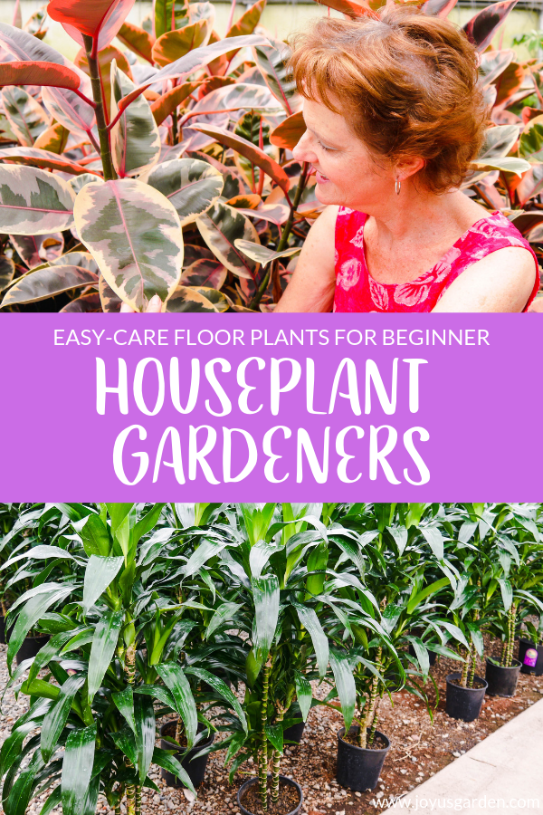7 Easy Care Floor Plants For Beginning Houseplant Gardeners
