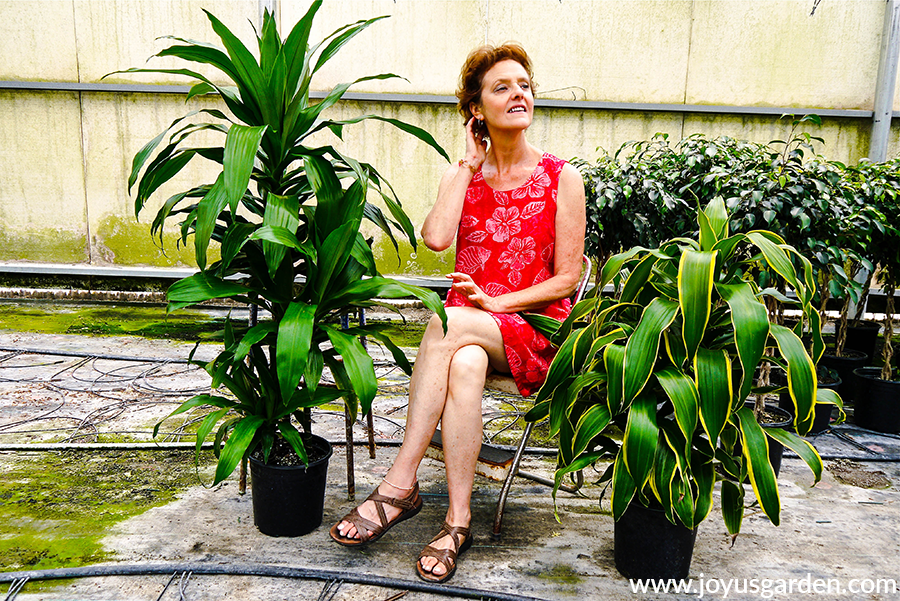 nell foster sits in between 2 large houseplants 1 is a dracaena lisa & the other is a dracaena art