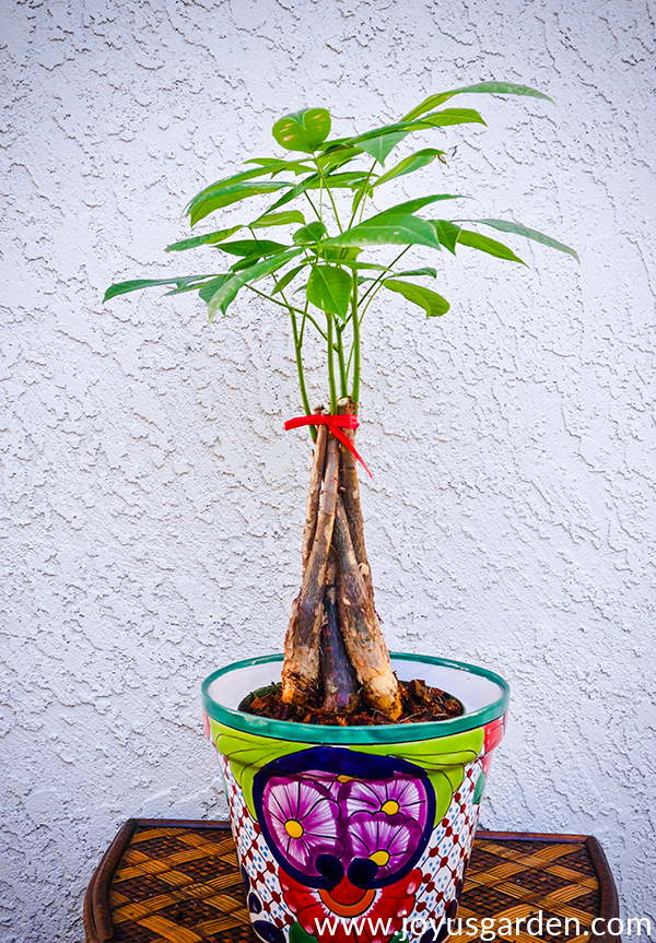a small money tree tied with a red ribbon at the top sits inside a talavera pot