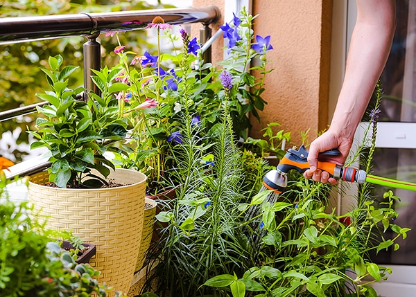a hand is holding a hose & watering an assortment of plants on a balcony garden