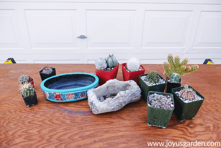 small cacti in pots & 2 low decorative containers sit on a work table