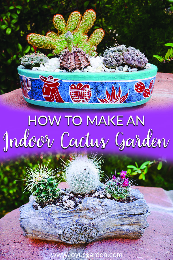 How To Make An Indoor Cactus Garden