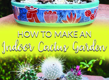 Cacti are all the rage. They're interesting & require very little care. Here are the materials needed & the steps to take to making an indoor cactus garden.