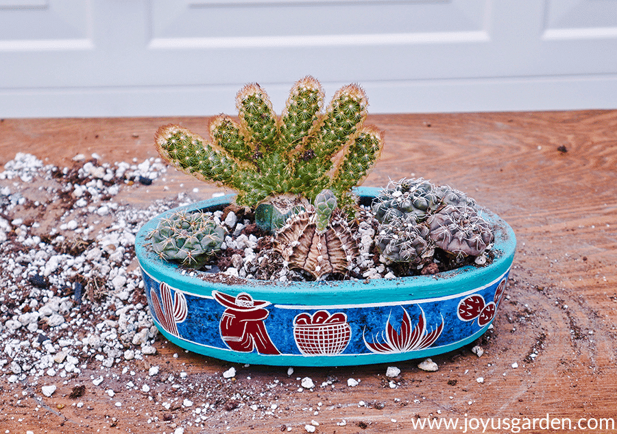How To Make An Indoor Cactus Garden Joy Us Garden