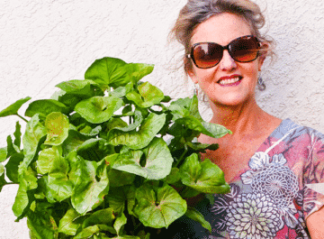 nell foster of joy us garden is holding an arrowhead plant the text reads arrowhead plant repotting
