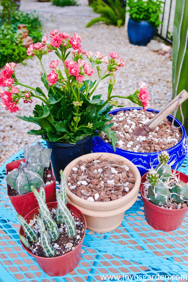 Succulent and Cactus Soil Mix For Pots: A Recipe To Make Your Own